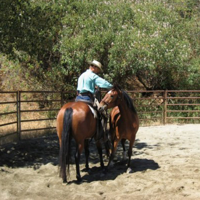 Practical Horseman Magazine